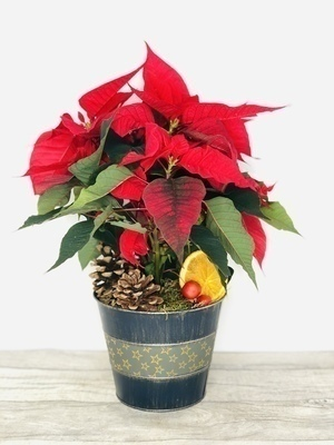 We have a wide selection of Planted Arrangements - we offer Flower Delivery Liverpool. We can provide Planted Arrangements for you in Liverpool - Merseyside and can organize Planted Arrangement deliveries for you Nationwide.  In this section you will find all our Planted Arrangements across all our collections. Your Planted Arrangements will be handmade by our Florists and hand delivered with a smile. Remember Booker Flowers and Gifts for Planted Arrangements delivered in Liverpool - Merseyside and beyond.   We offer Flower Delivery Liverpool and same day flower delivery and all our flowers hand arranged by our Florists are backed by our 7 day freshness guarantee